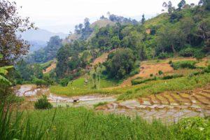 view rice fields ella rock sri lanka