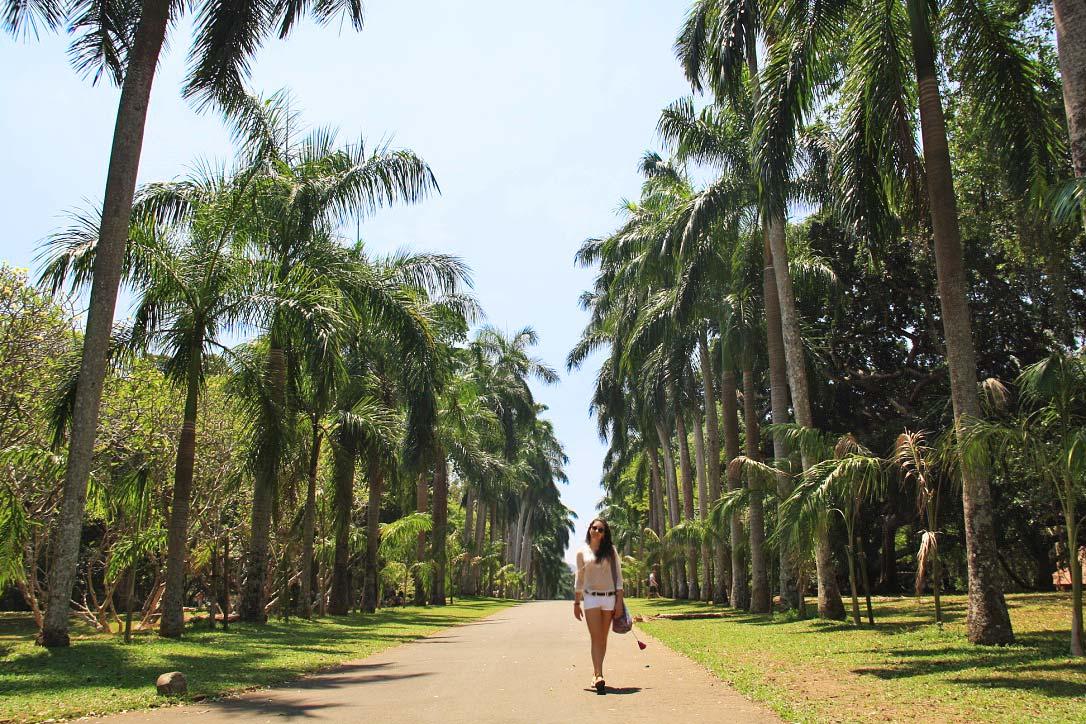 botanical gardens palmtree lane kandy sri lanka
