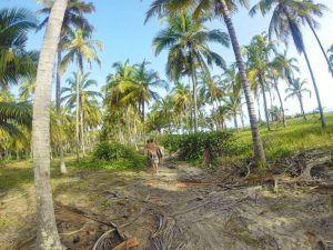 costeno beach surfing coconut plantation colombia