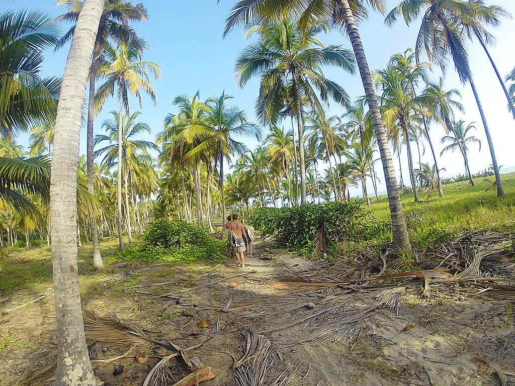 costeno beach surfing coconut plantation colombia south america