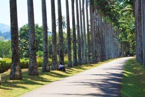 kandy botanical gardens sri lanka