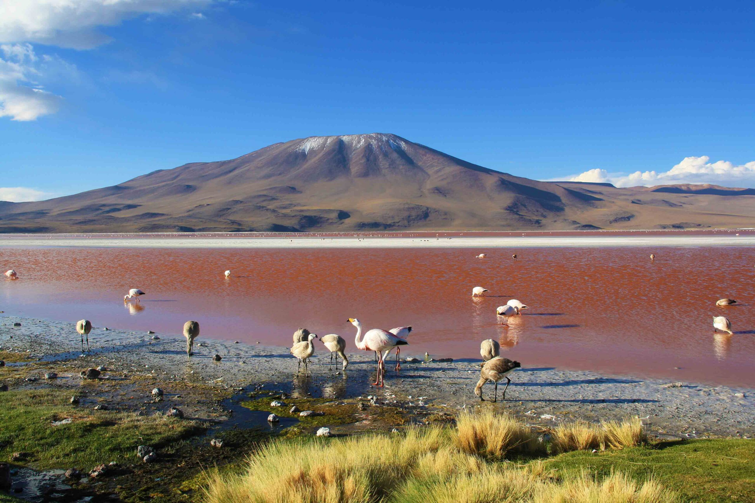 laguna colorado salt flats tour uyuni bolivia