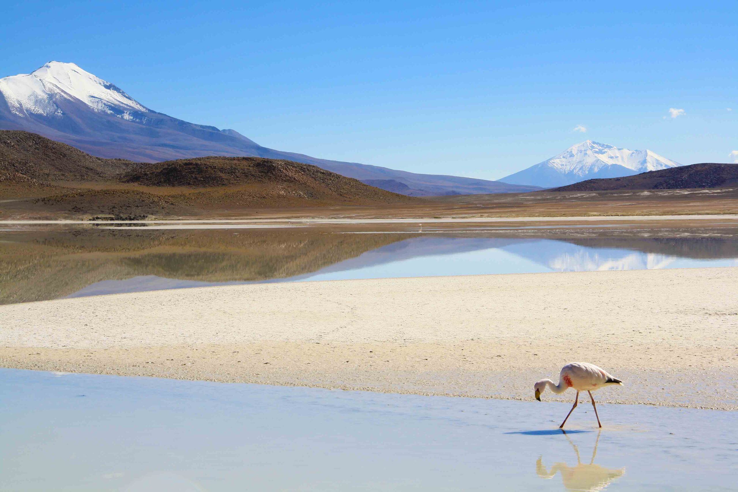 reflection flamingo salt flats tour uyuni bolivia