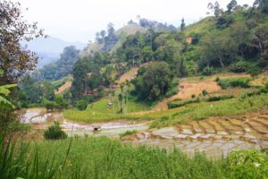 rice fields view ella train sri lanka