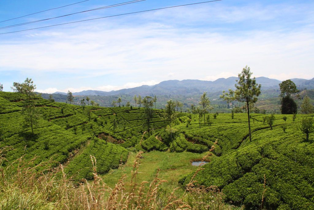 tea plantations view train kandy ella sri lanka
