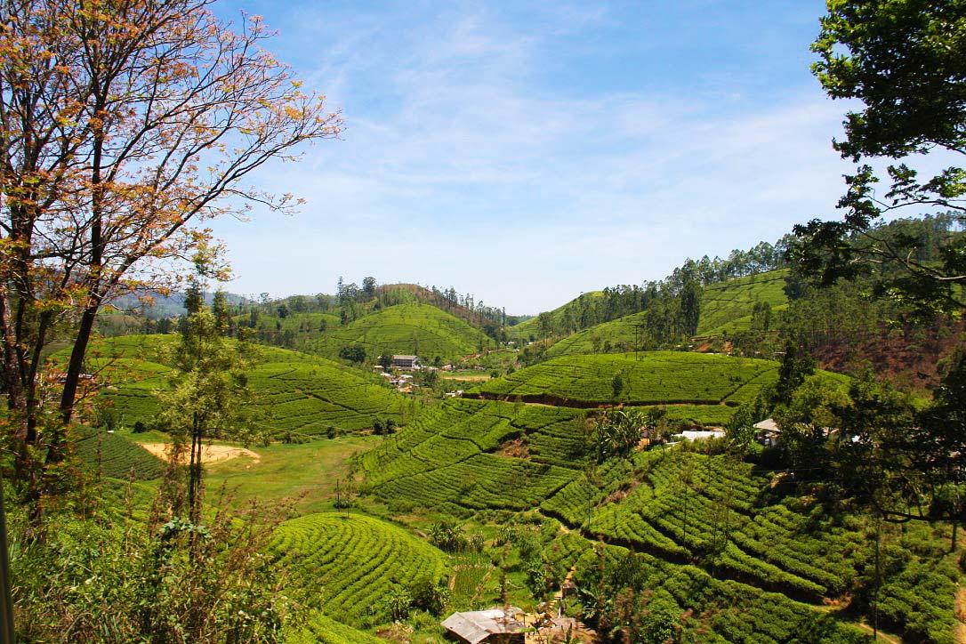 train view kandy ella tea plantations sri lanka