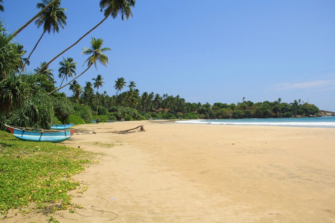 dickwella beach view palmtrees sri lanka