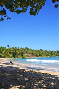hiriketiya bay beach view ocean palmtrees dog sri lanka