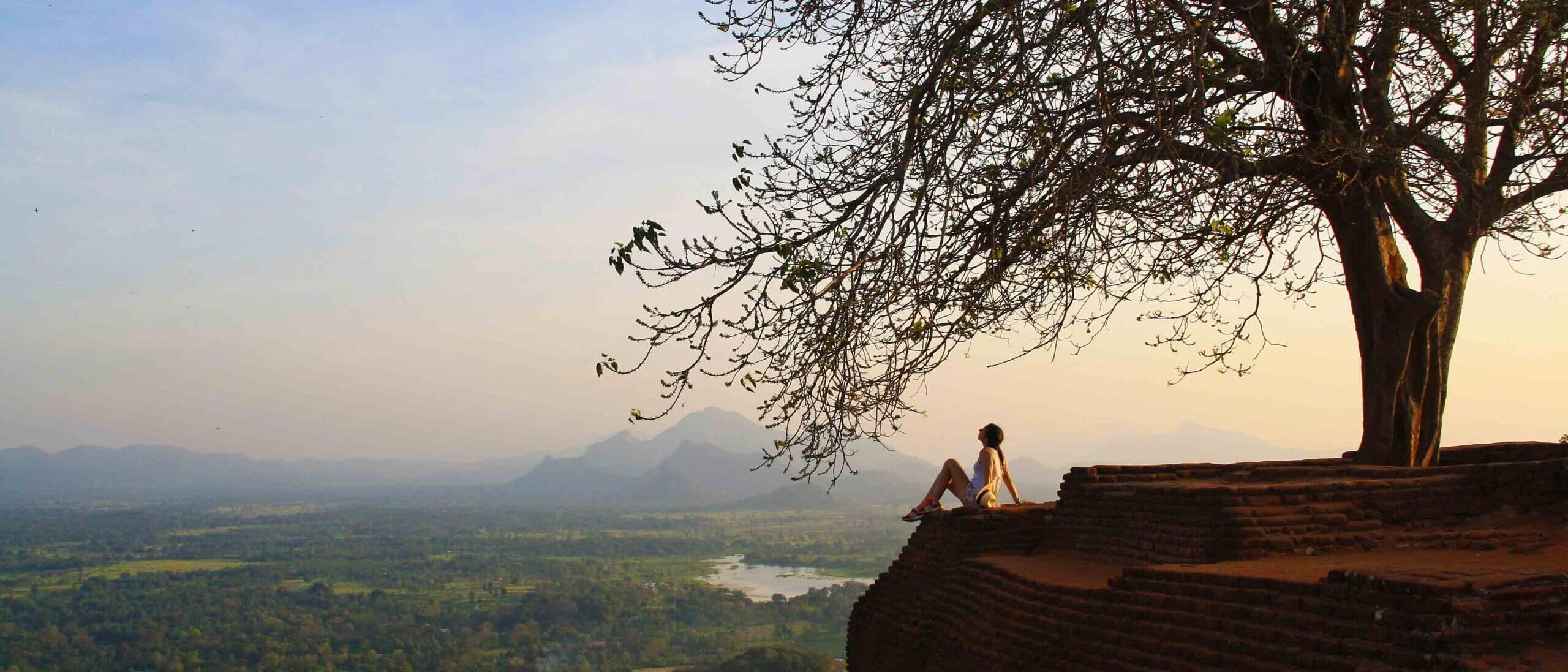 tree sigiriya rock fortress view sunset sri lanka