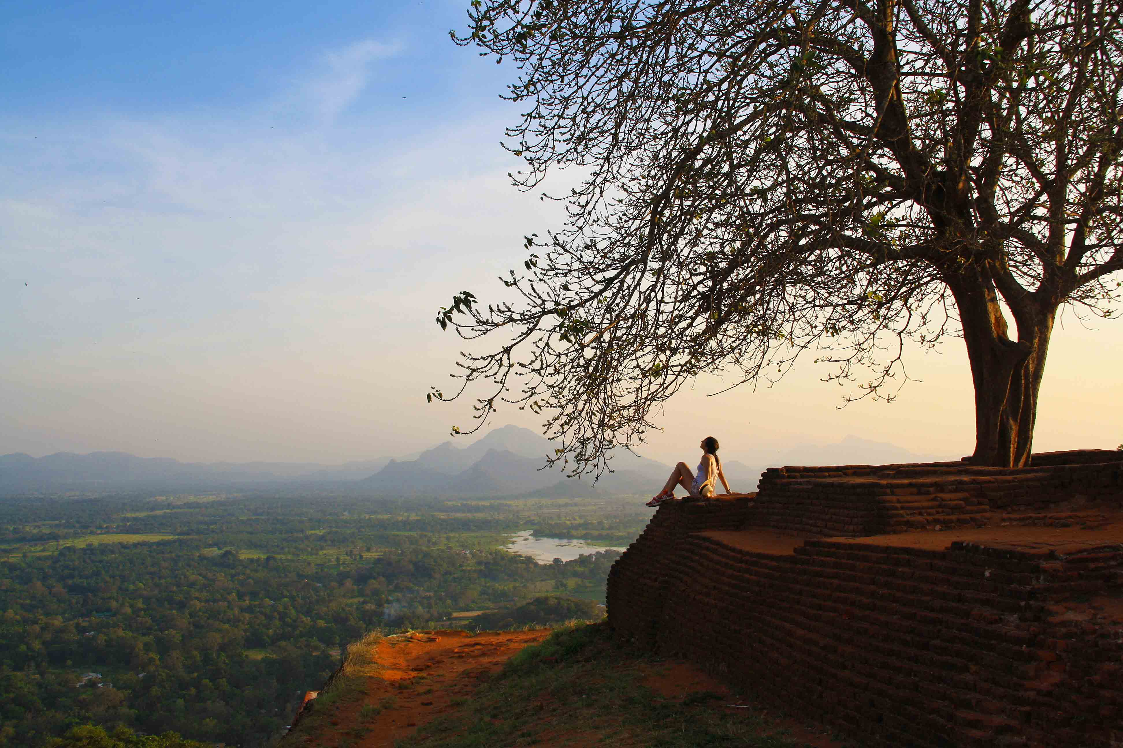 tree sigiriya rock fortress view sunset sri lanka