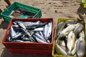 catch fish praia da tocha portugal