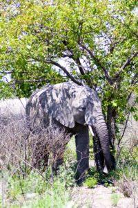 addo elephant park surf destinations jeffreys bay south africa