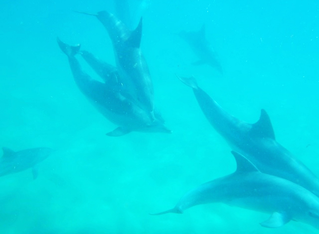 Dolphin centre in Ponta do Ouro ocean mozambique