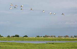 bird chobe national park botswana