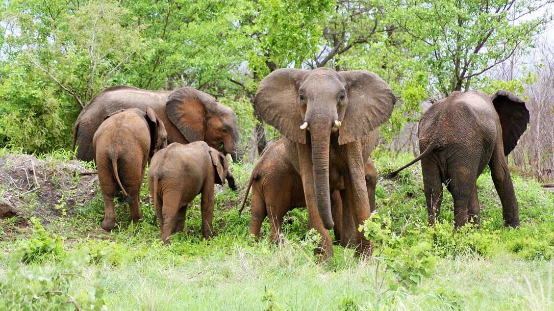Elephant herd in Chobe National Park Botswana