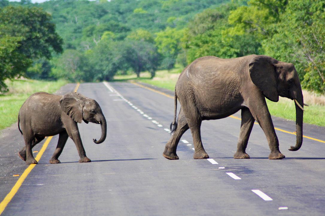 elephants chobe national park botswana