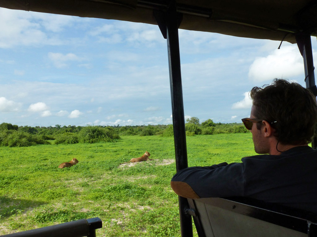 game drive chobe national park lions botswana