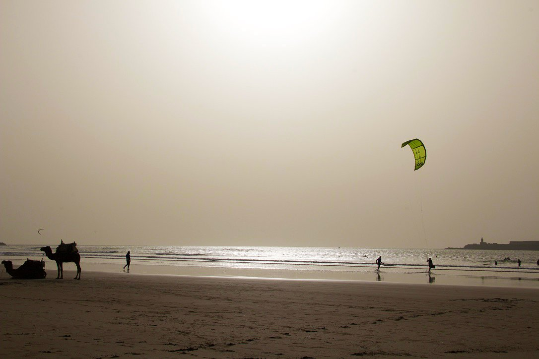 beach essaouira camels kitesurfing karma surf retreat