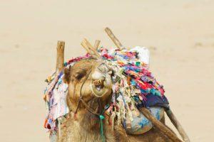 camel beach essaouira karma surf retreat