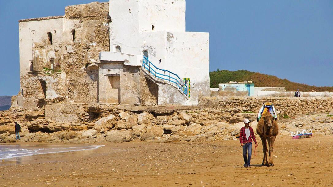 Camel at Sidi Kaouki beach in Morocco
