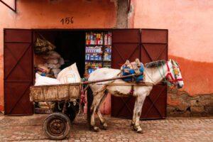 Donkey transport in the medina of Marrakech