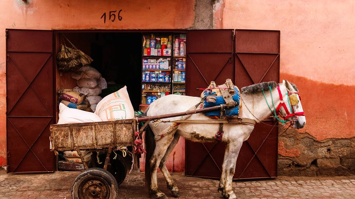 Donkey transport in the medina of Marrakech