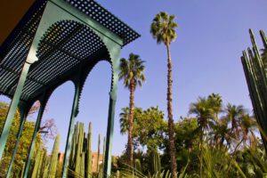 garden palmtrees jardin majorelle marrakech morocco
