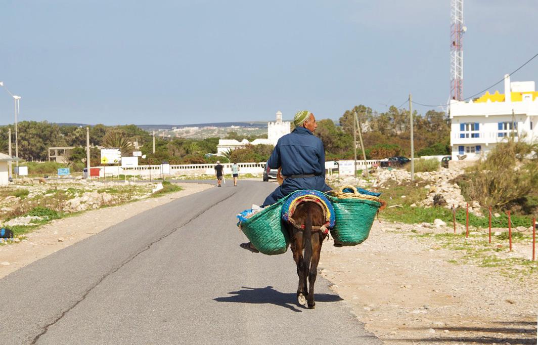 man donkey sidi kaouki morocco