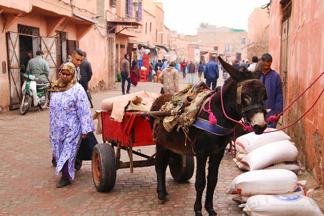 streets marrakech medina donkey morocco