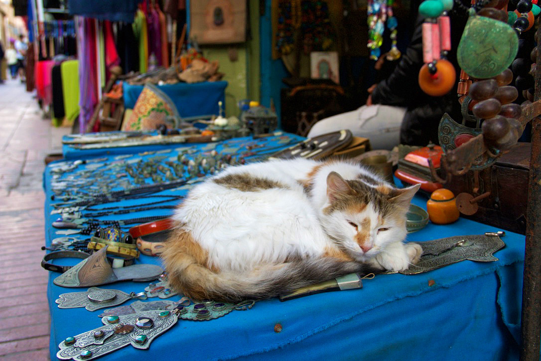 cat medina shop souk essaouira morocco