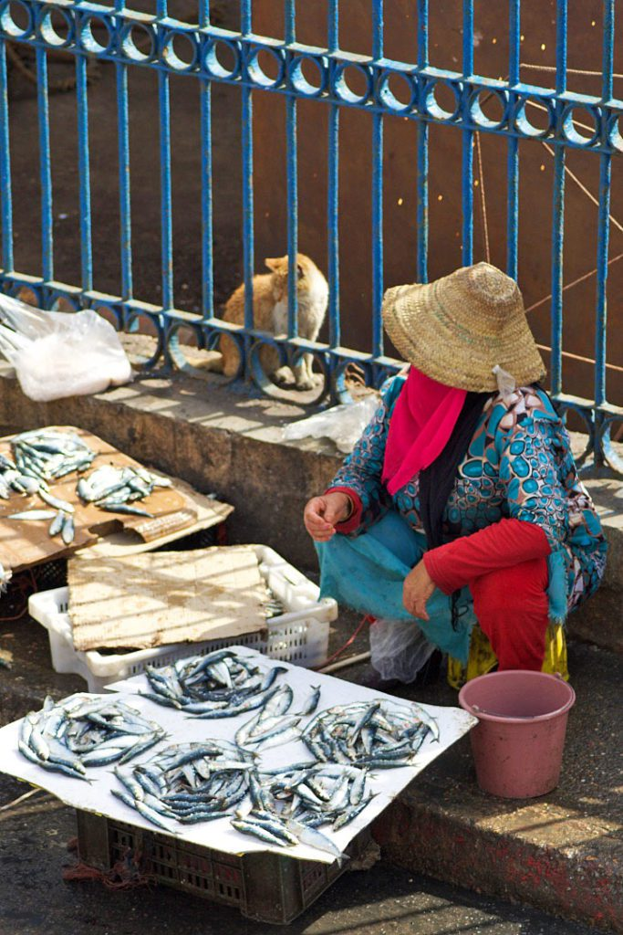 fish market harbour cats essaouira morocco