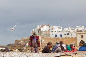 fishermen harbor seagulls essaouira morocco