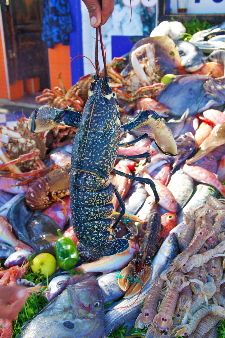 seafood fish market lobster essaouira morocco
