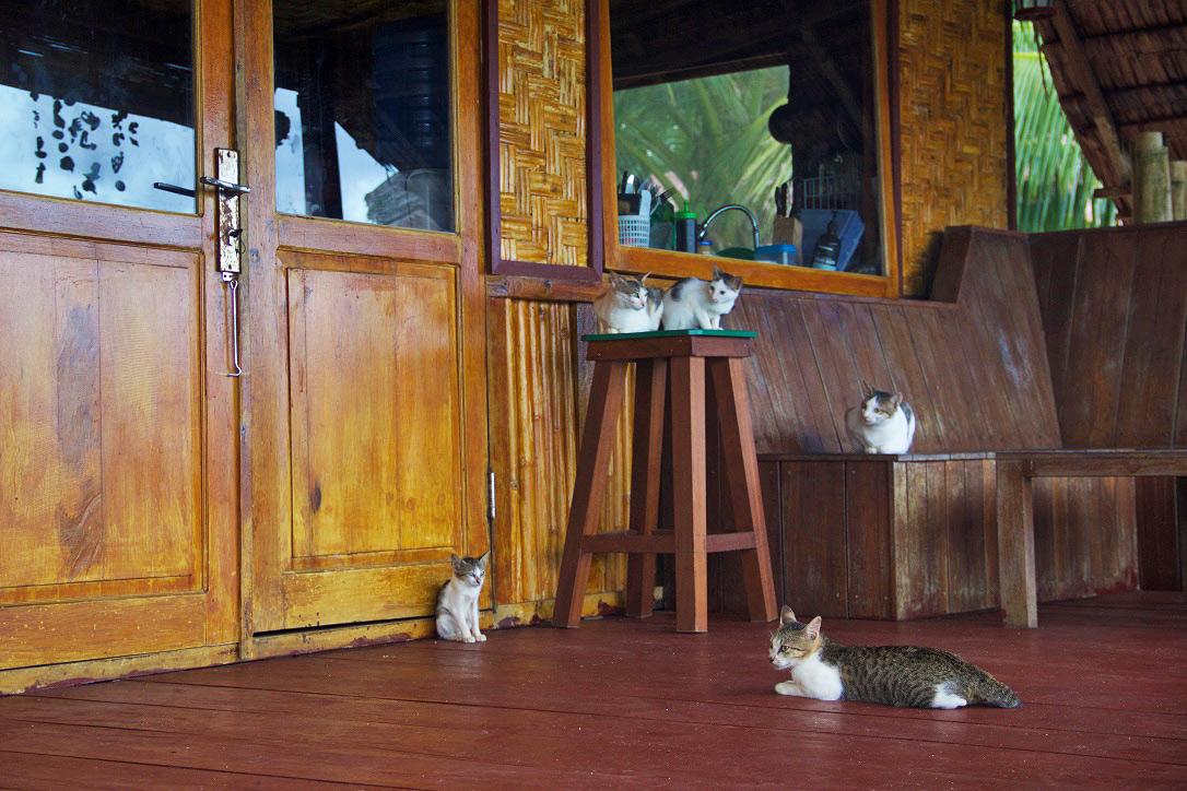 cats simeulue surf lodges sumatra