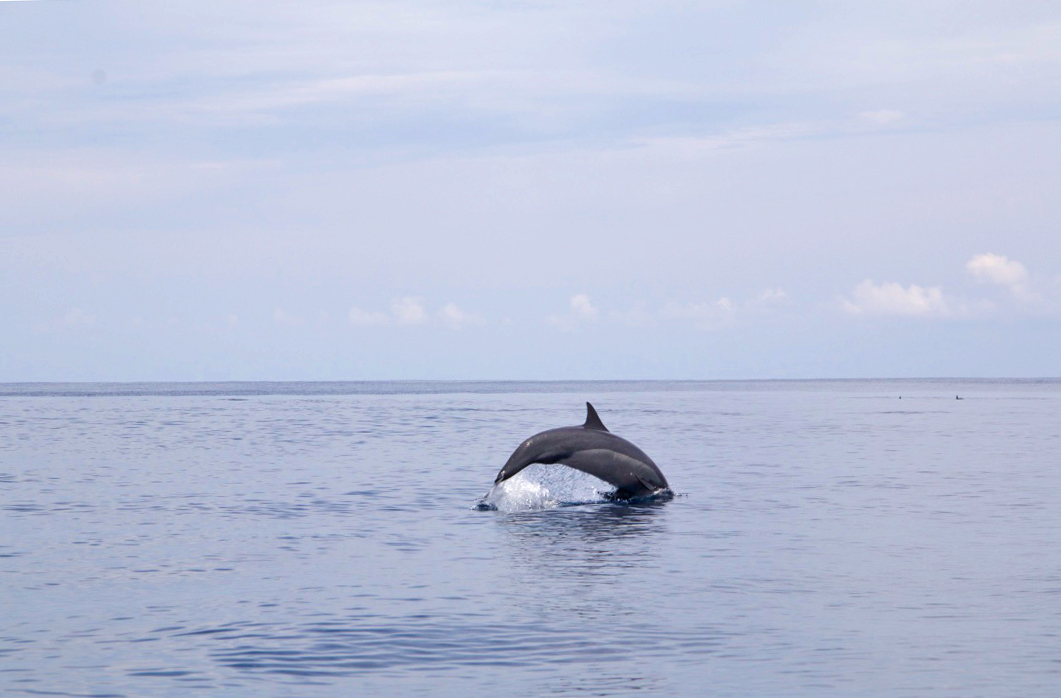 dolphins boat trip simeulue island sumatra