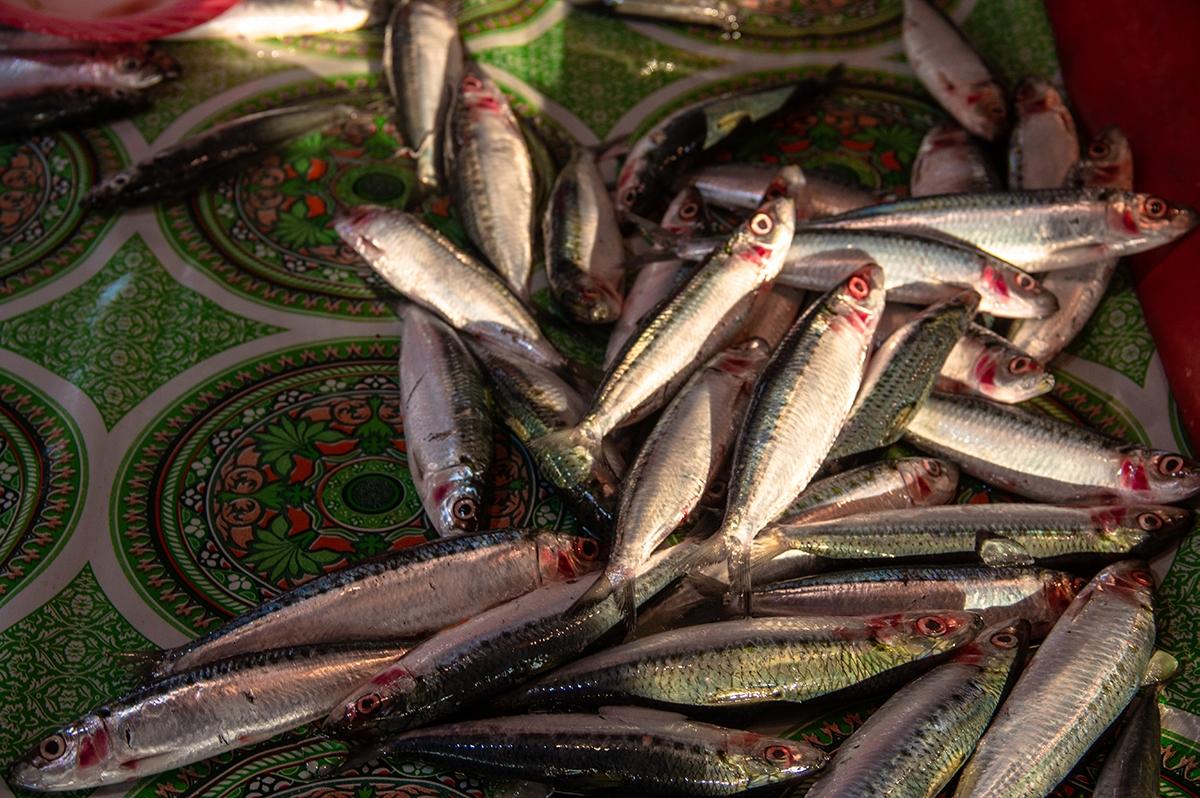 Sardines at Simeulue Sumatra