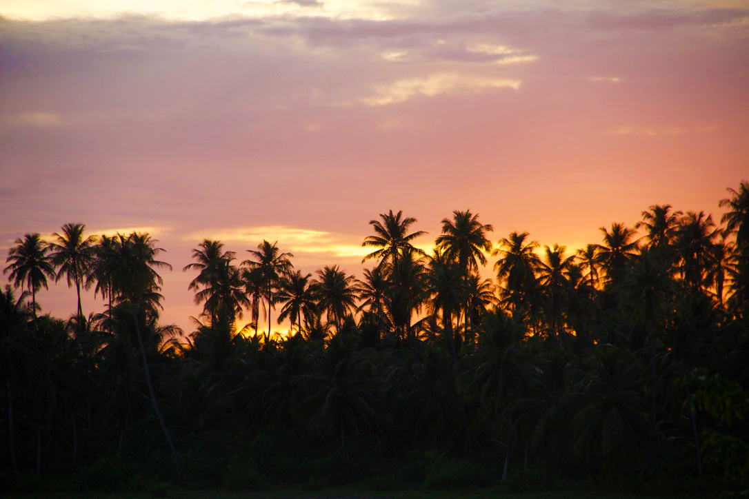 sunset palmtrees simeulue island sumatra