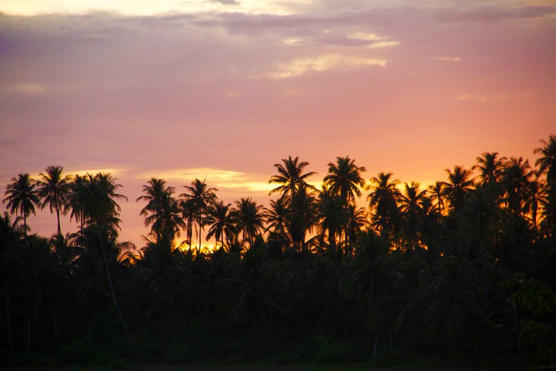 sunset palmtrees simeulue island sumatra