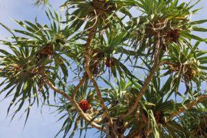 tree simeulue surf lodges sumatra