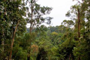 gunung leuser national park bukit lawang jungle sumatra