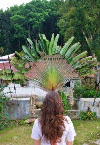 jungle bukit lawang palm sumatra