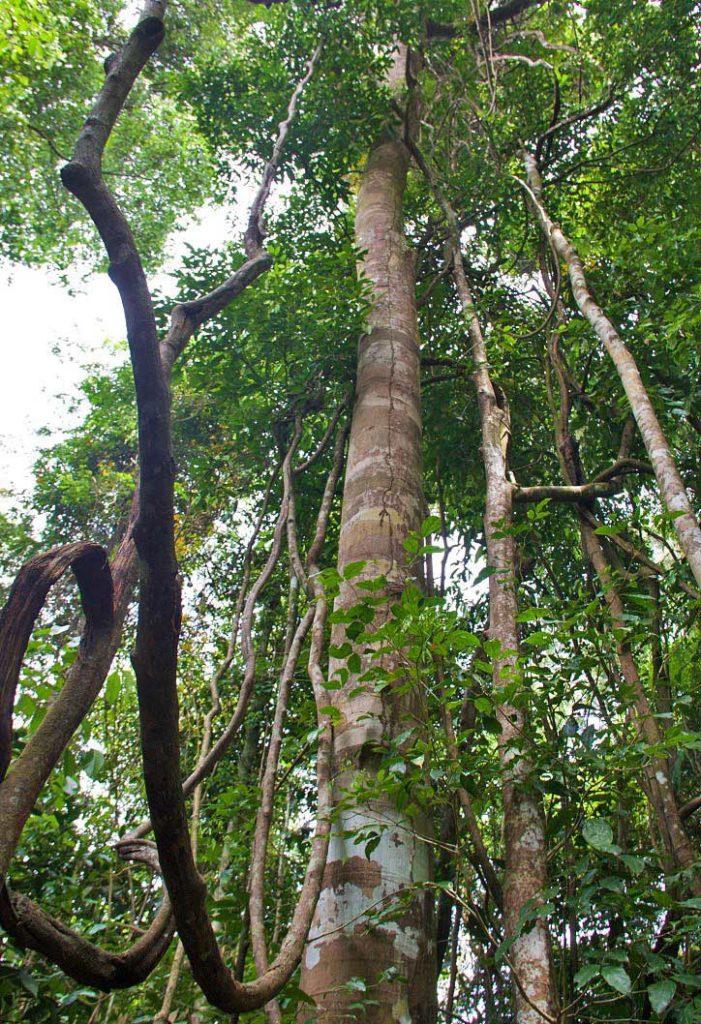 jungle gunung leuser national park sumatra