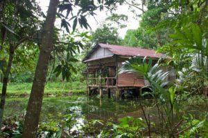 jungle house bukit lawang sumatra