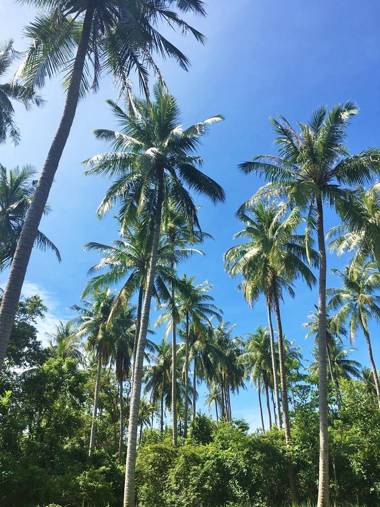pulau weh island palmtrees sumatra