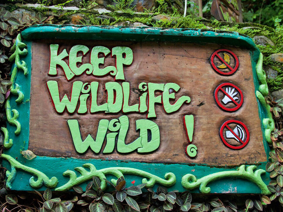sign wildlife bukit lawang sumatra