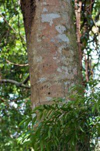 tree animal tracks gunung leuser national park sumatra