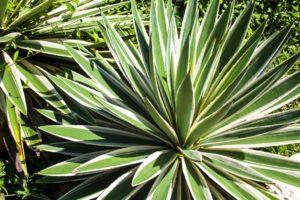 fat plants sandat glamping tents garden ubud