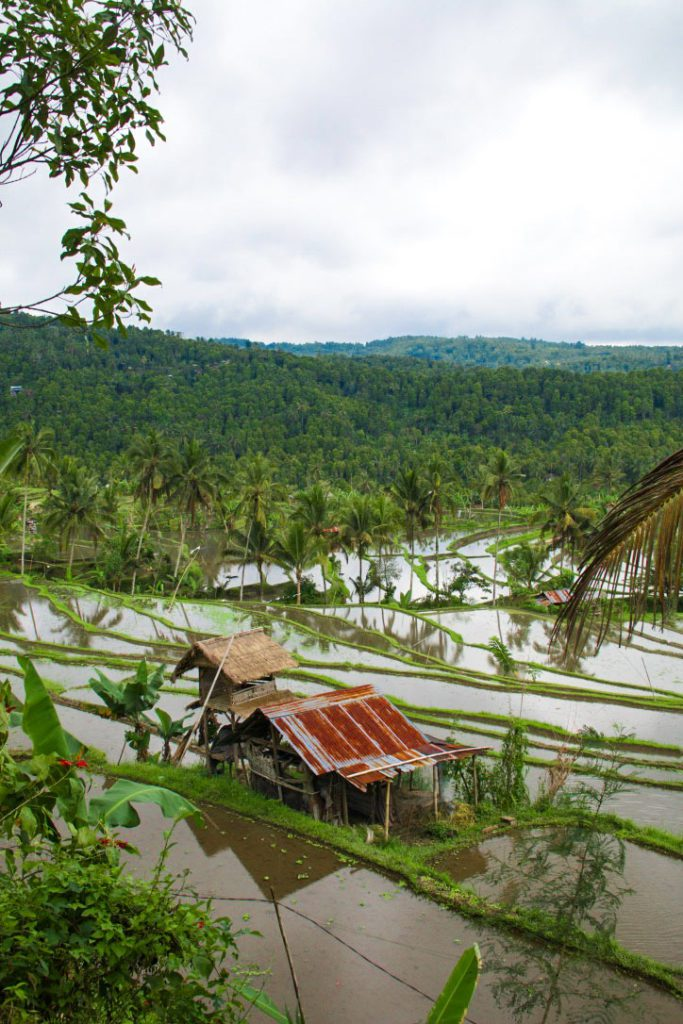 munduk rice fields north bali