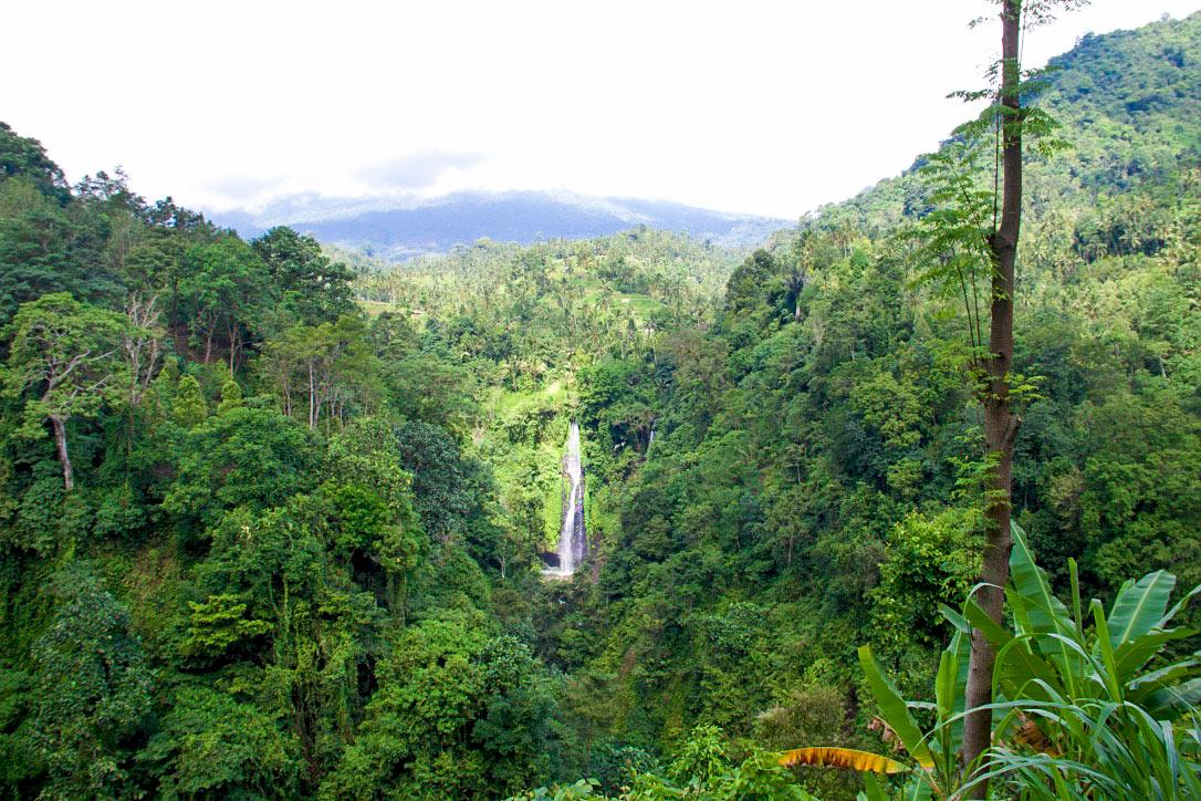 nature hills forest sekumpul waterfalls north bali
