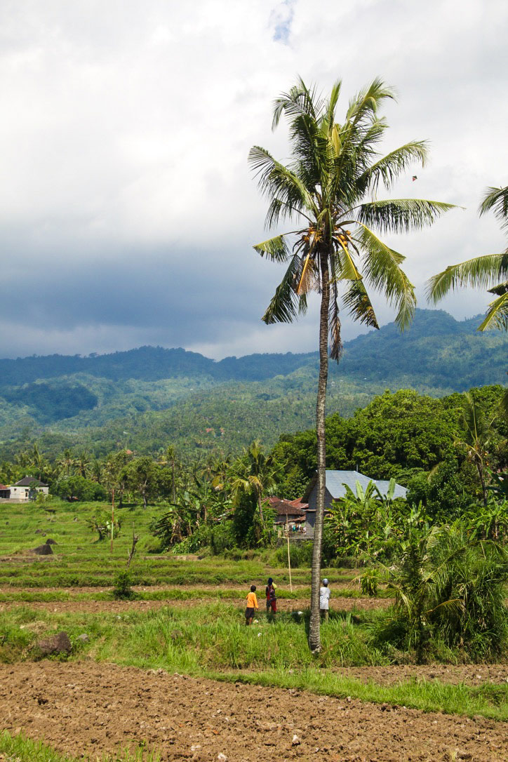 north bali hills rice fields
